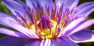 kwiaty z kwiaciarni